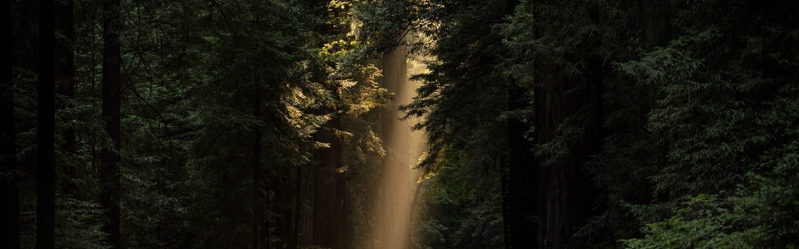 Picture of light through a forest
