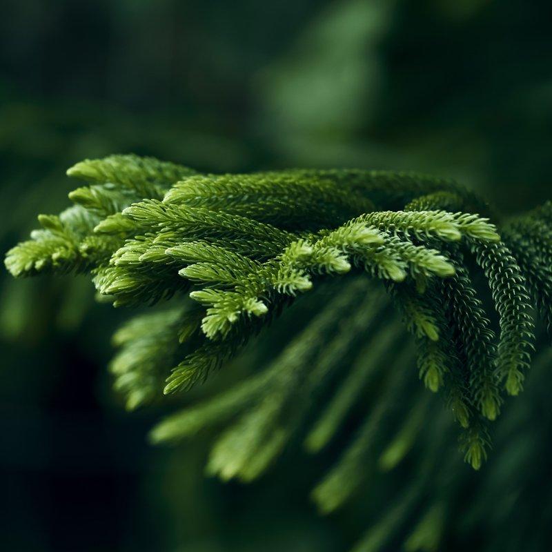 Branch image