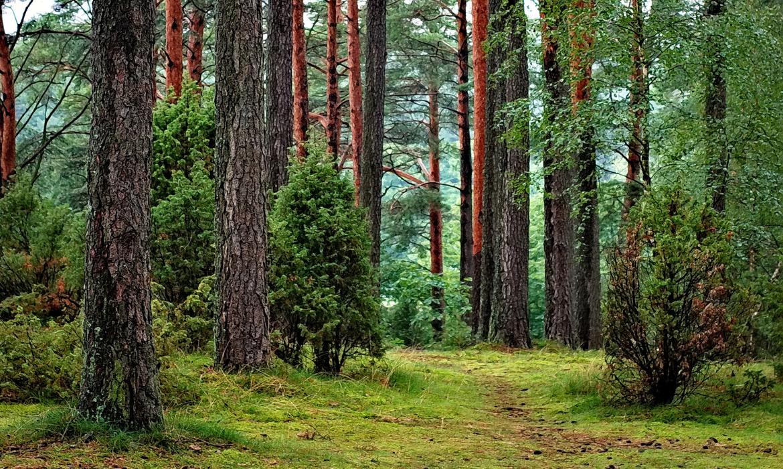 Photo of woods